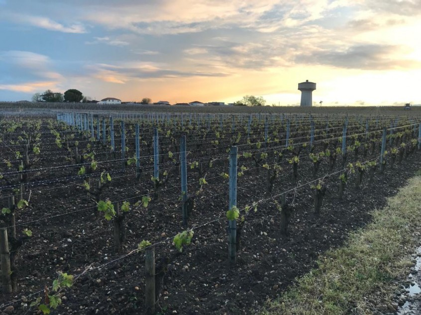 Sunset at Chateau Haut Brion